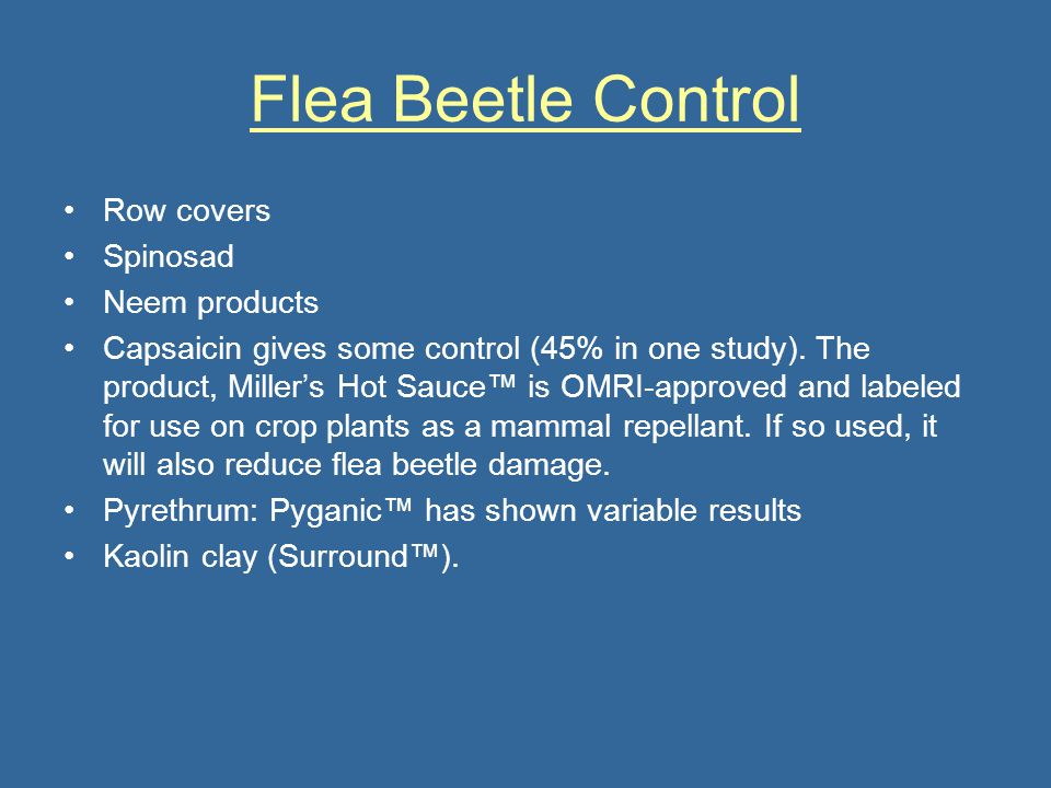 Flea Beetle Control Row covers Spinosad Neem products