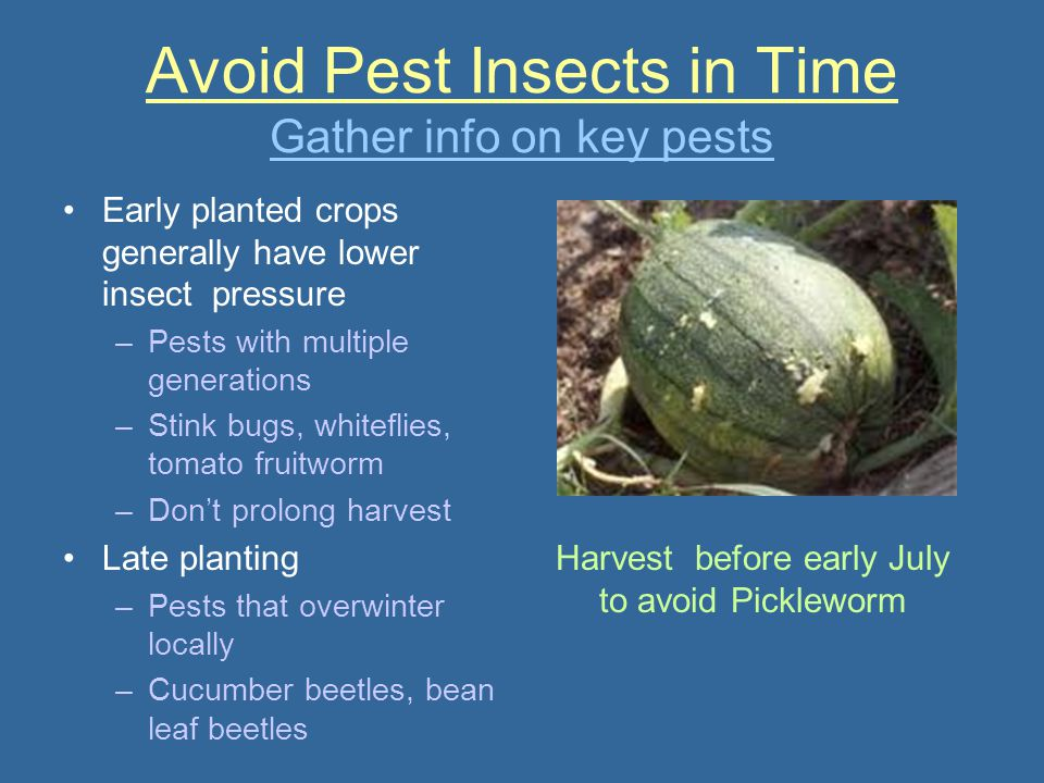 Avoid Pest Insects in Time Gather info on key pests