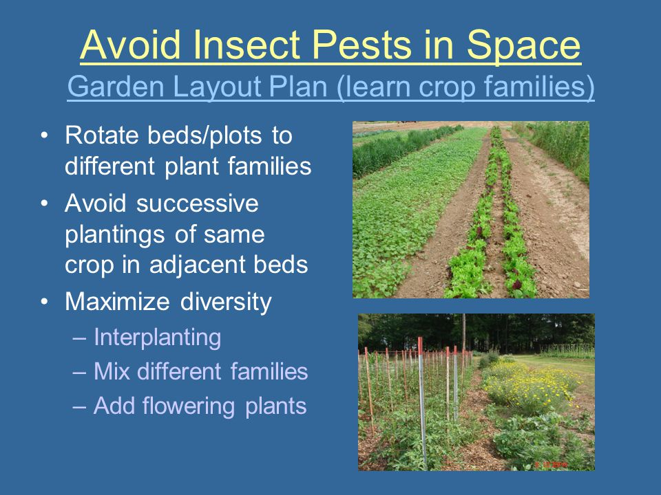 Avoid Insect Pests in Space Garden Layout Plan (learn crop families)