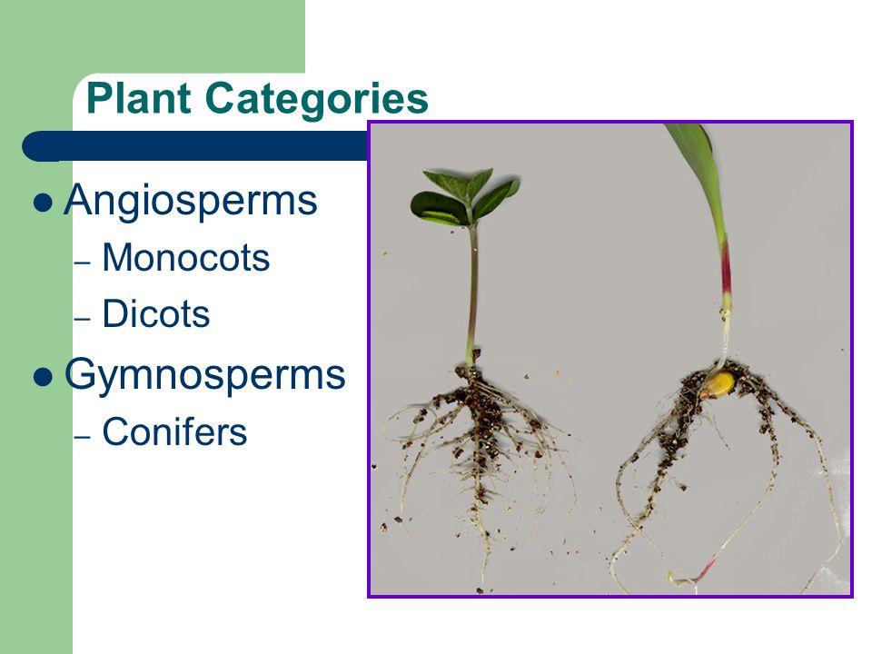 Plant Categories Angiosperms Gymnosperms Monocots Dicots Conifers