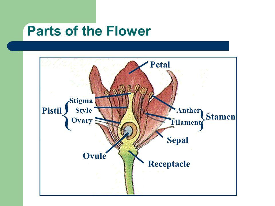 { } Parts of the Flower Petal Pistil Stamen Sepal Ovule Receptacle