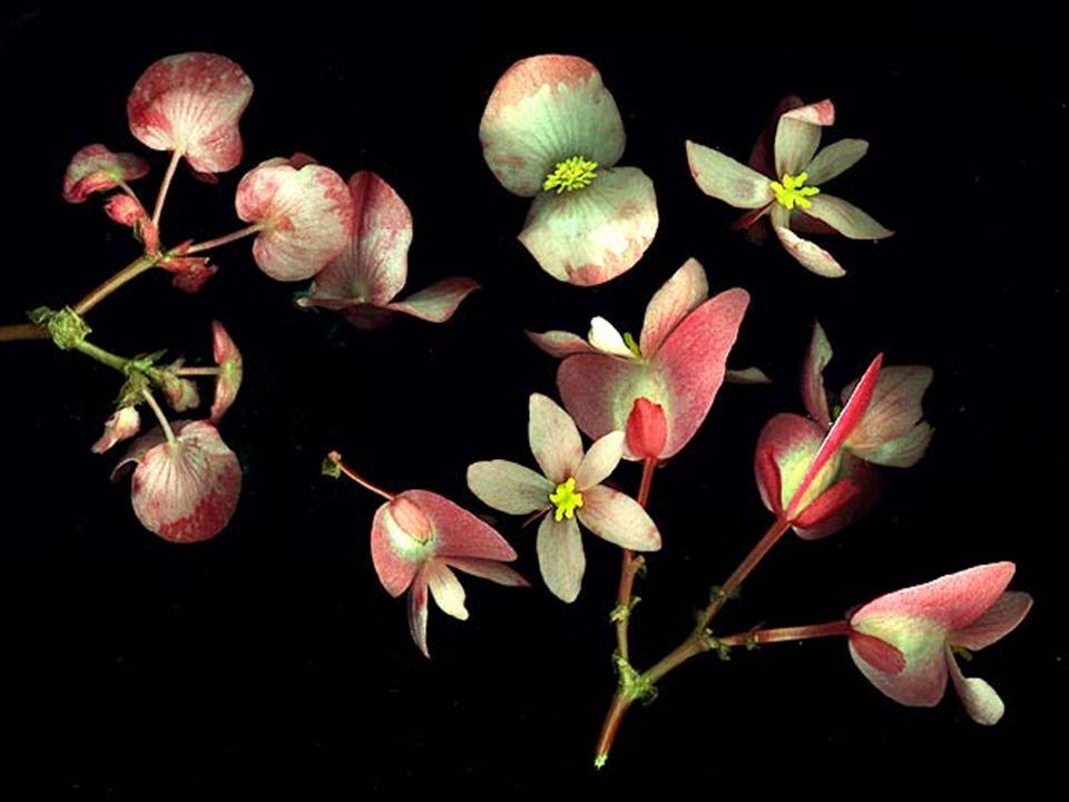 Types of Flowering Plants