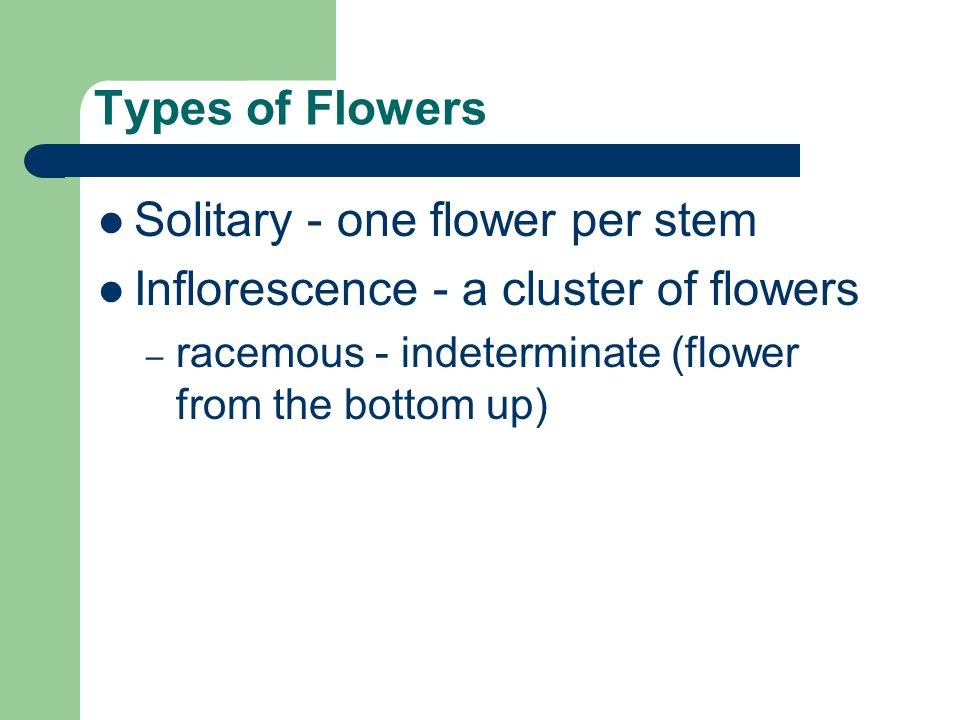Solitary - one flower per stem Inflorescence - a cluster of flowers
