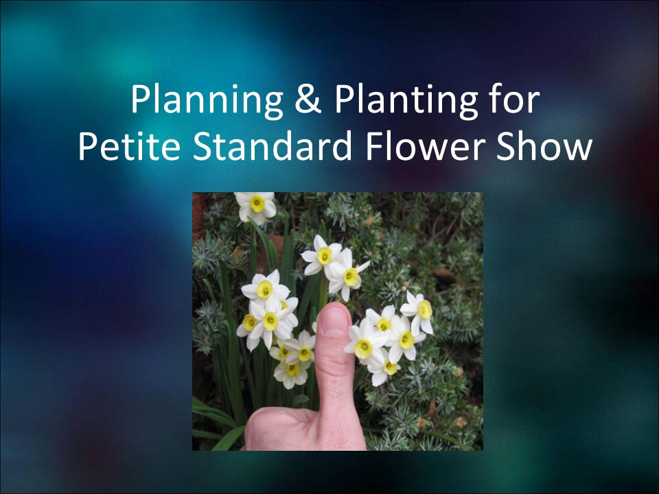 Planning & Planting for Petite Standard Flower Show