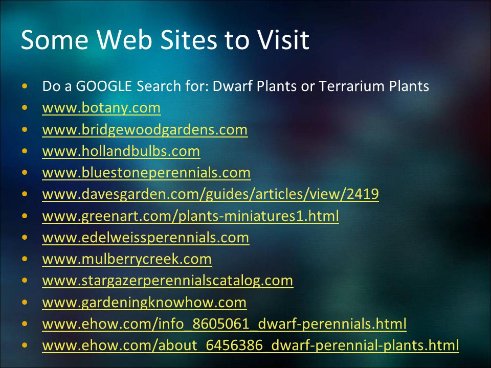 Some Web Sites to Visit Do a GOOGLE Search for: Dwarf Plants or Terrarium Plants. www.botany.com. www.bridgewoodgardens.com.