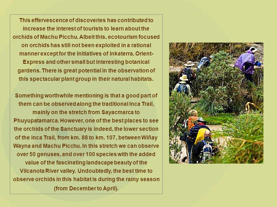 This effervescence of discoveries has contributed to increase the interest of tourists to learn about the orchids of Machu Picchu.