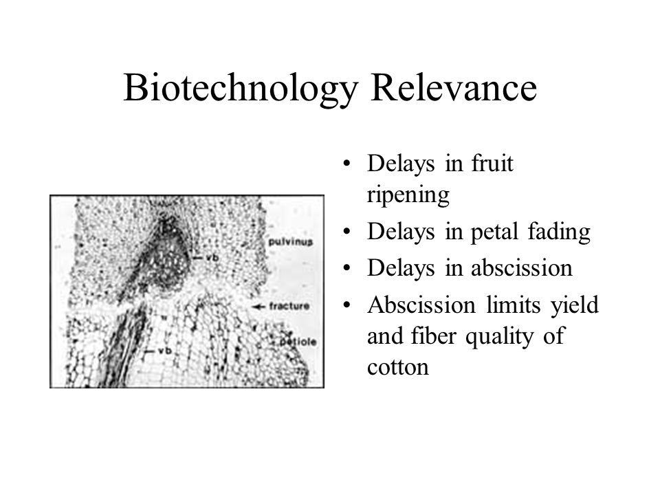 Biotechnology Relevance