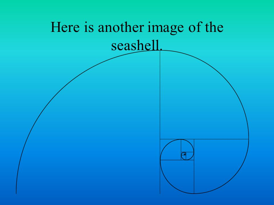 Here is another image of the seashell.