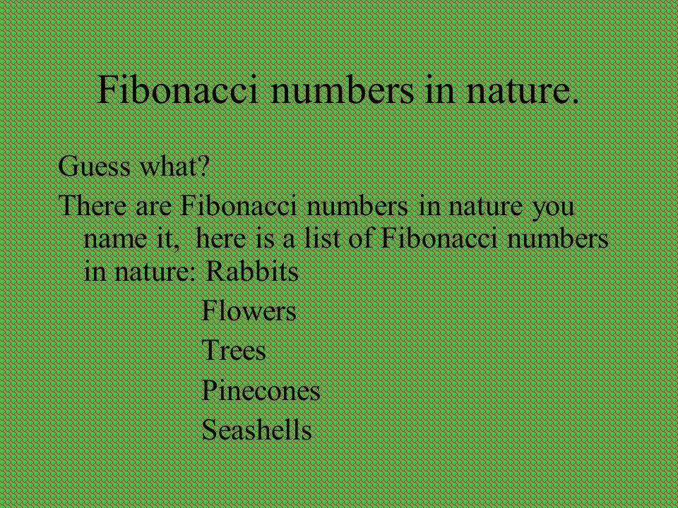 Fibonacci numbers in nature.
