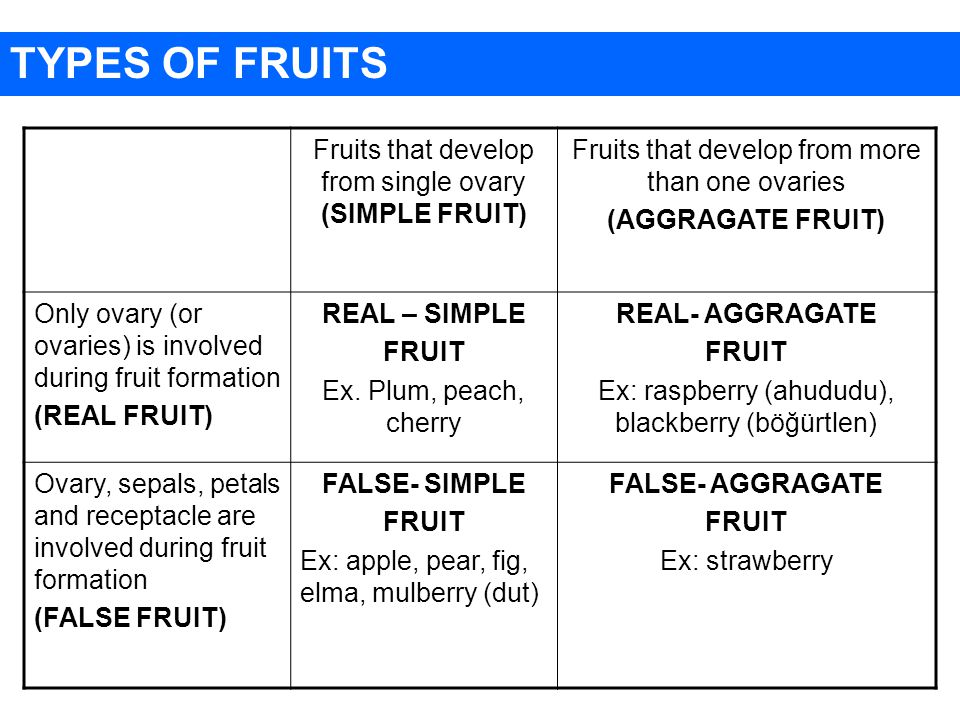 TYPES OF FRUITS Fruits that develop from single ovary (SIMPLE FRUIT)