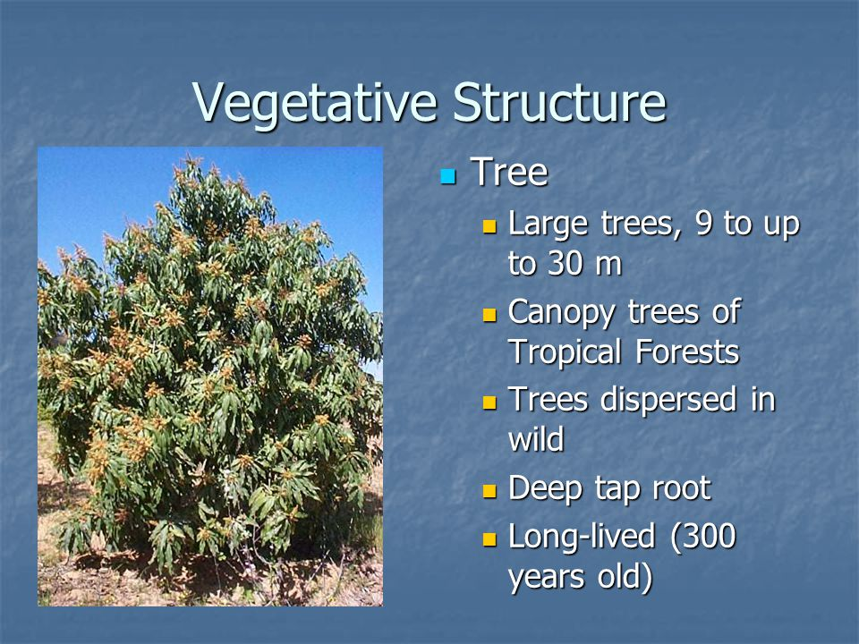 Vegetative Structure Tree Large trees, 9 to up to 30 m