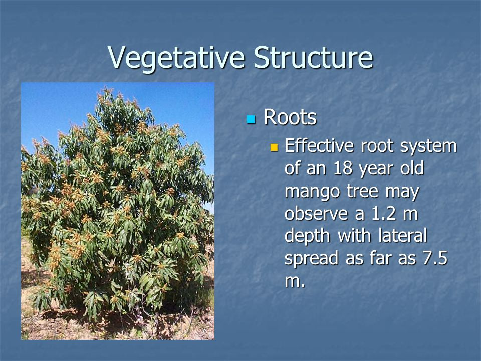 Vegetative Structure Roots