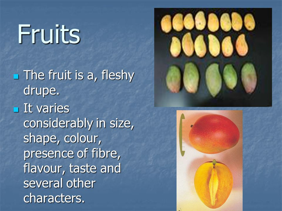 Fruits The fruit is a, fleshy drupe.
