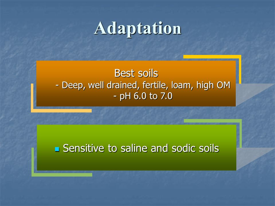 Adaptation Best soils Sensitive to saline and sodic soils