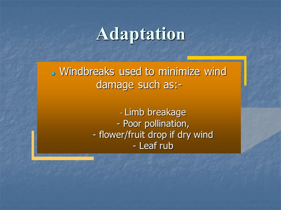 Adaptation Poor pollination, flower/fruit drop if dry wind - Leaf rub
