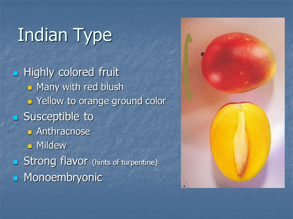 Indian Type Highly colored fruit Susceptible to