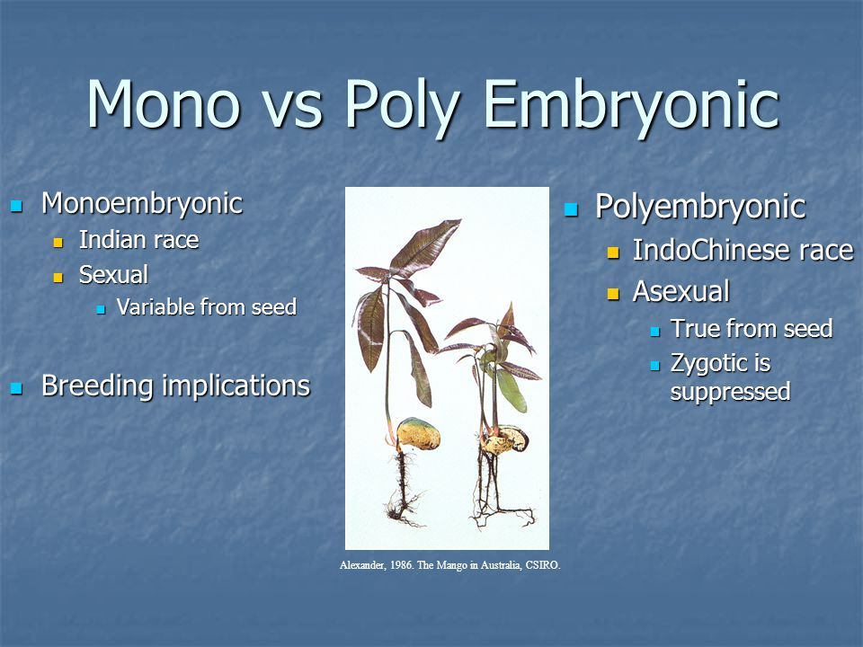 Mono vs Poly Embryonic Polyembryonic Monoembryonic IndoChinese race
