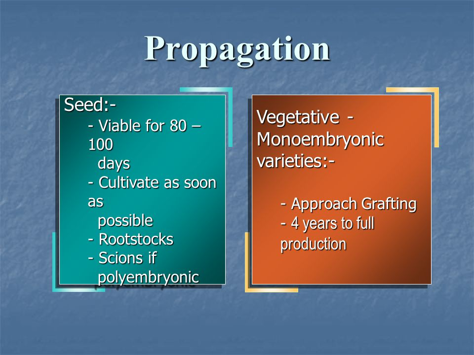Propagation Seed:- Vegetative - Monoembryonic varieties:-