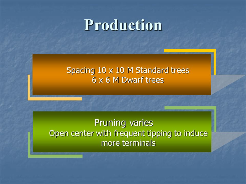Production Pruning varies Spacing 10 x 10 M Standard trees