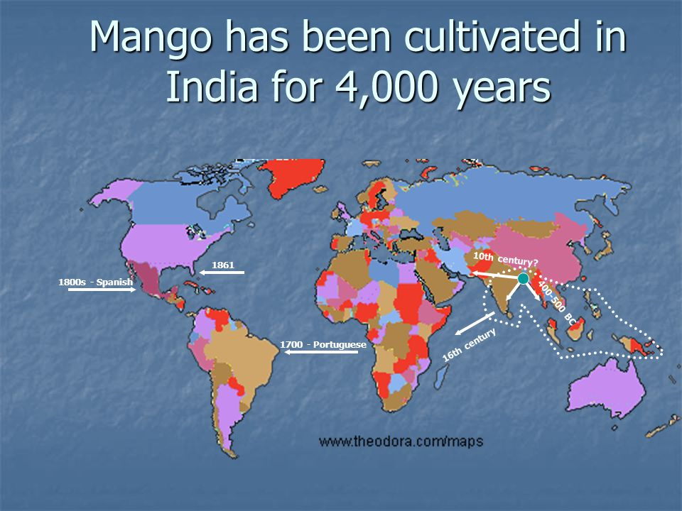 Mango has been cultivated in India for 4,000 years