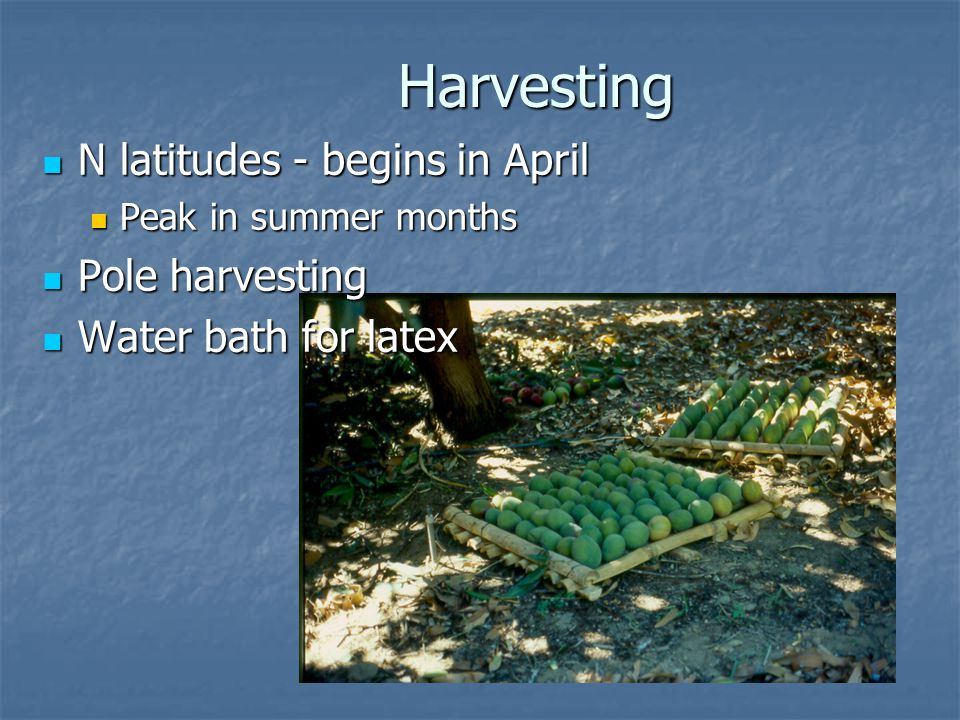 Harvesting N latitudes - begins in April Pole harvesting