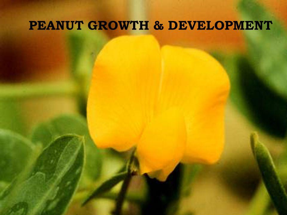 PEANUT GROWTH & DEVELOPMENT