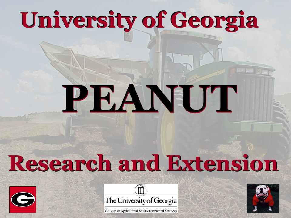 University of Georgia PEANUT Research and Extension