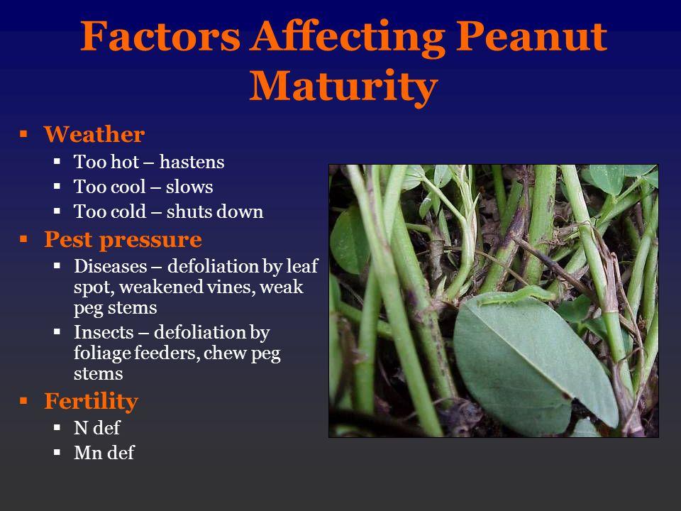 Factors Affecting Peanut Maturity