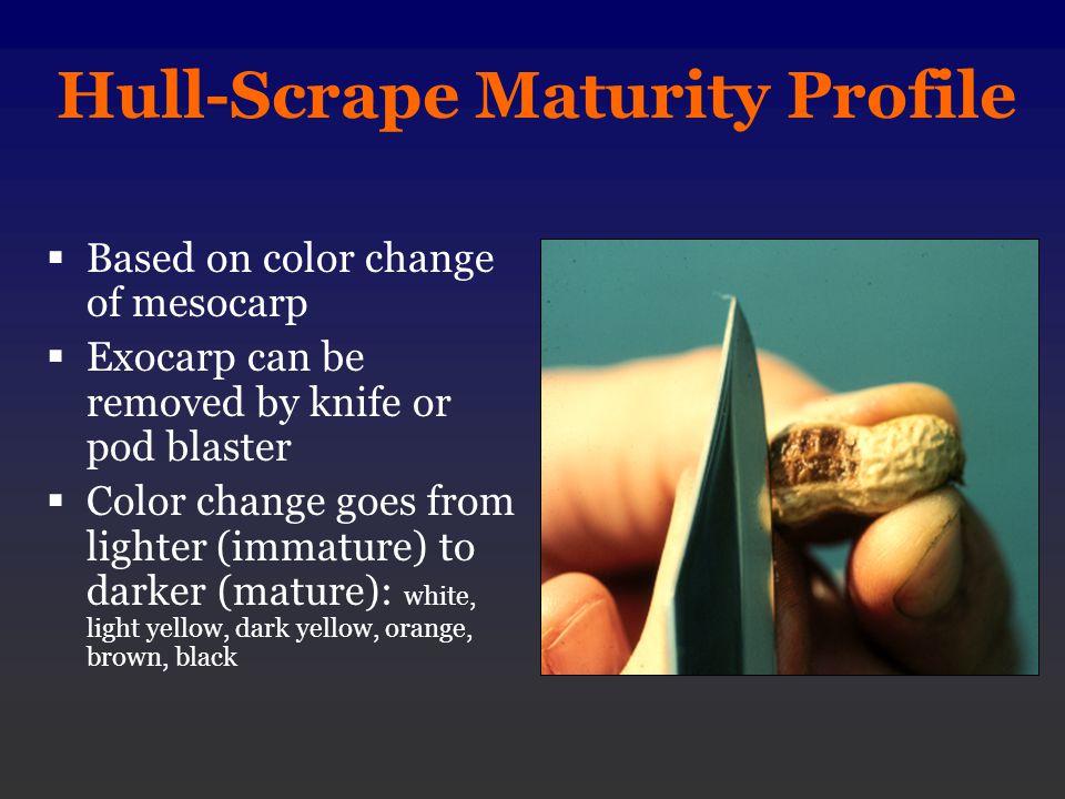 Hull-Scrape Maturity Profile