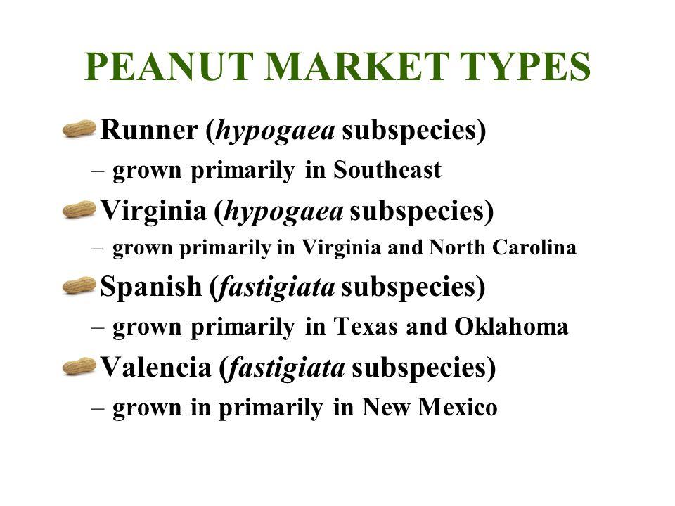 PEANUT MARKET TYPES Runner (hypogaea subspecies)