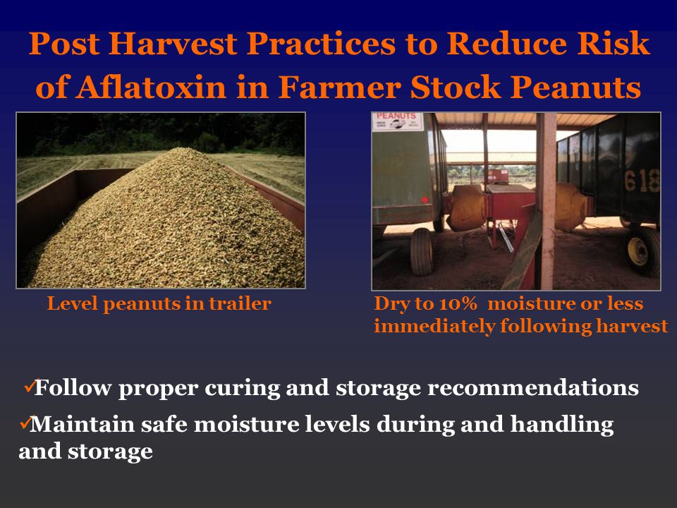 Post Harvest Practices to Reduce Risk of Aflatoxin in Farmer Stock Peanuts