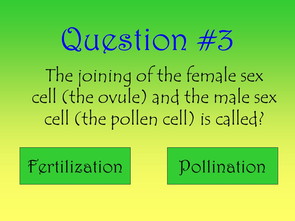 Question #3 The joining of the female sex cell (the ovule) and the male sex cell (the pollen cell) is called