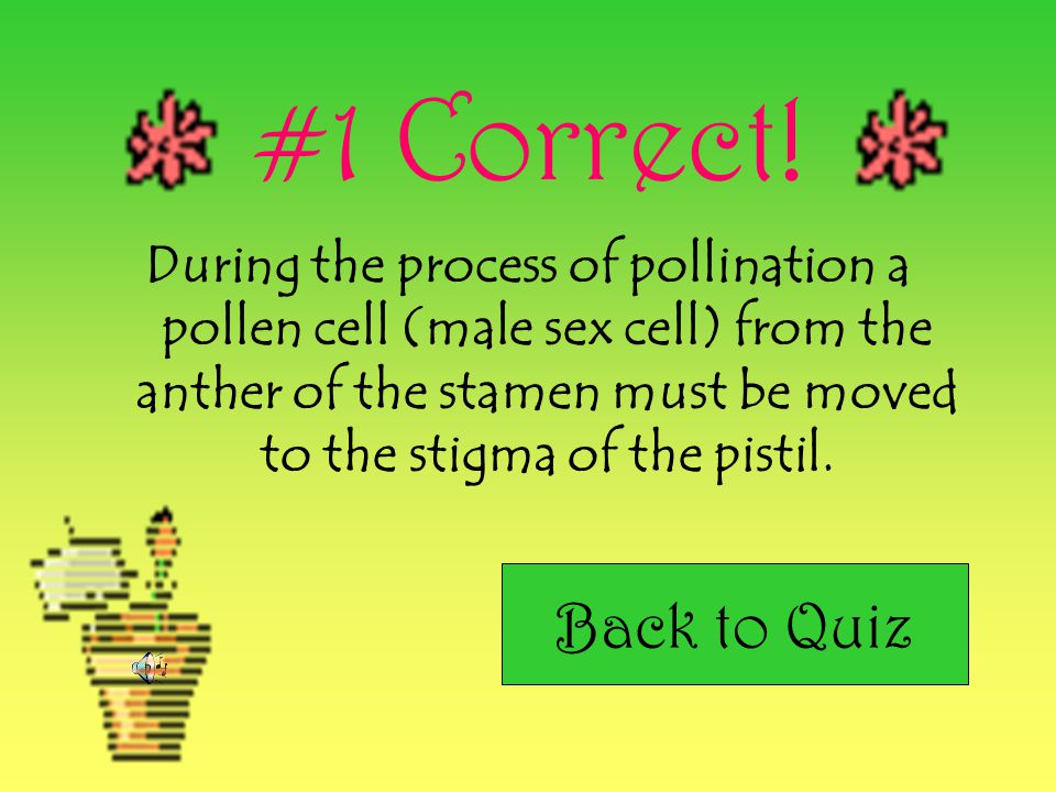 #1 Correct! During the process of pollination a pollen cell (male sex cell) from the anther of the stamen must be moved to the stigma of the pistil.