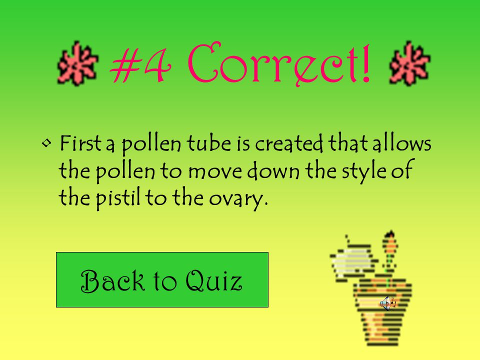 #4 Correct! First a pollen tube is created that allows the pollen to move down the style of the pistil to the ovary.