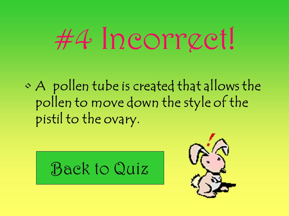 #4 Incorrect! Back to Quiz