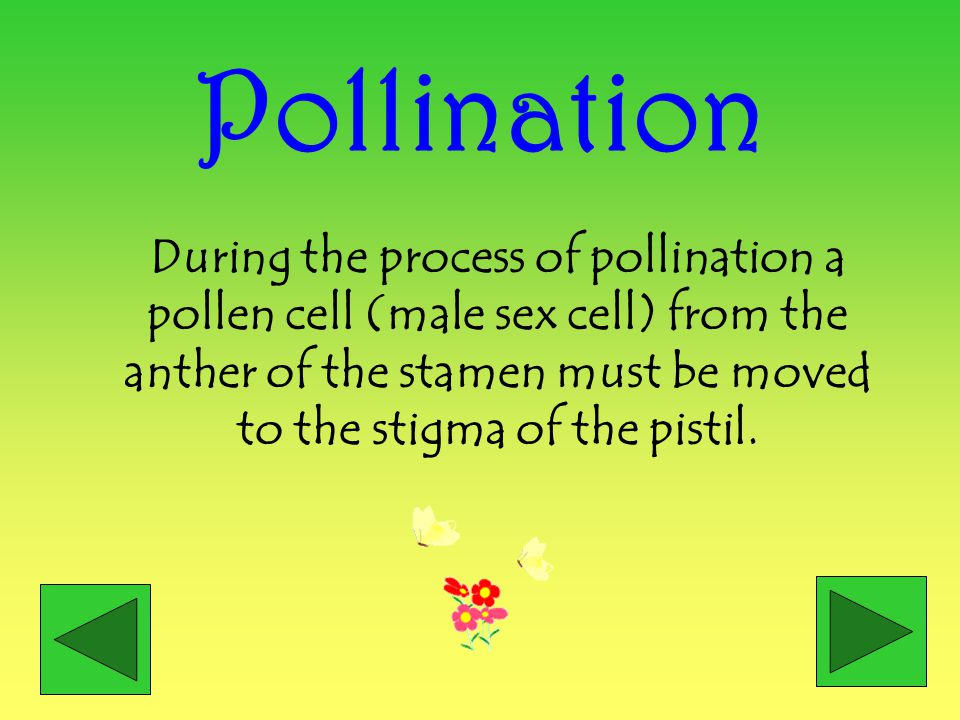 Pollination During the process of pollination a pollen cell (male sex cell) from the anther of the stamen must be moved to the stigma of the pistil.