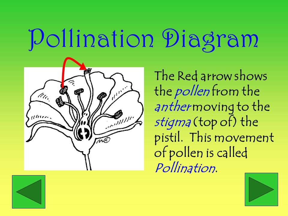Pollination Diagram