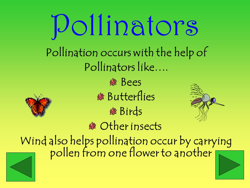 Pollination occurs with the help of