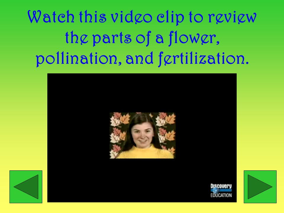 Watch this video clip to review the parts of a flower, pollination, and fertilization.