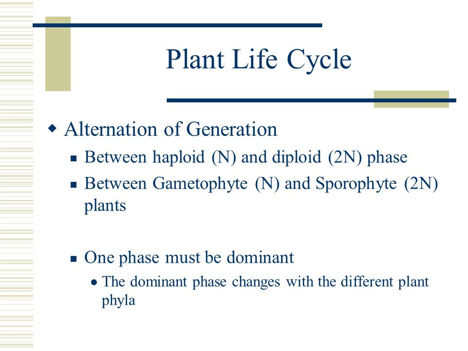 Plant Life Cycle Alternation of Generation
