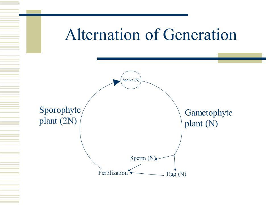 Alternation of Generation