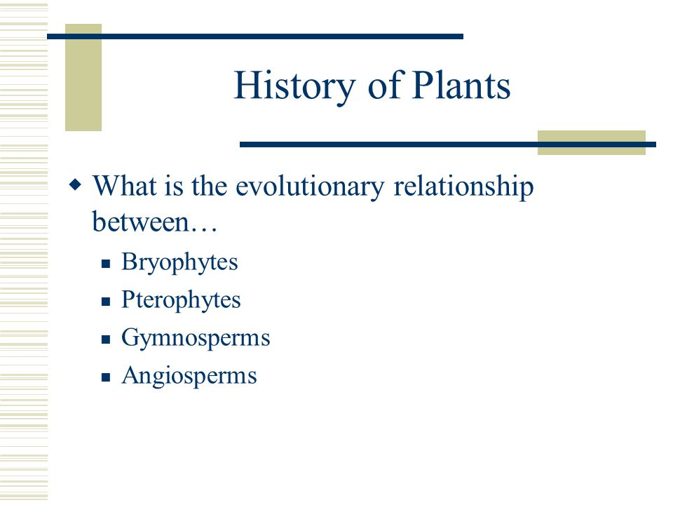 History of Plants What is the evolutionary relationship between…