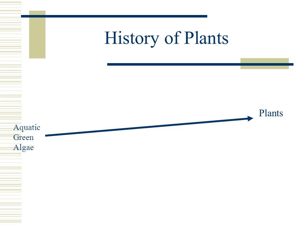 History of Plants Plants Aquatic Green Algae