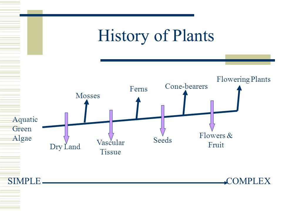 History of Plants SIMPLE COMPLEX Flowering Plants Cone-bearers Ferns
