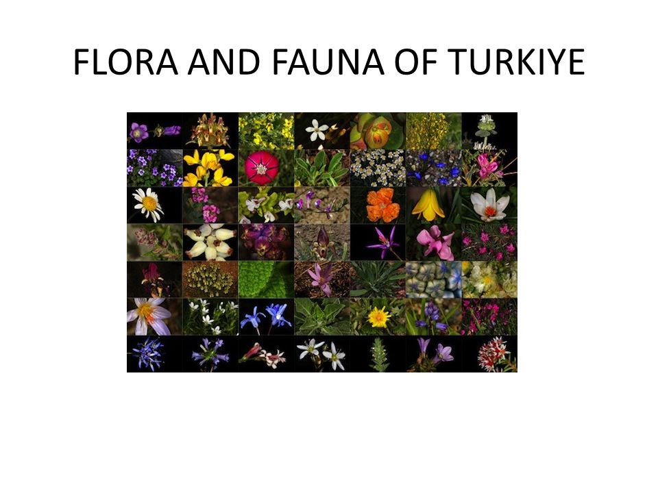 FLORA AND FAUNA OF TURKIYE