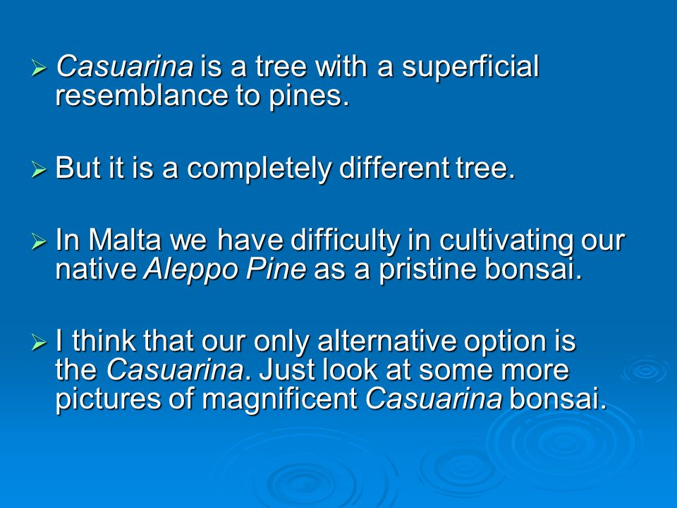 Casuarina is a tree with a superficial resemblance to pines.