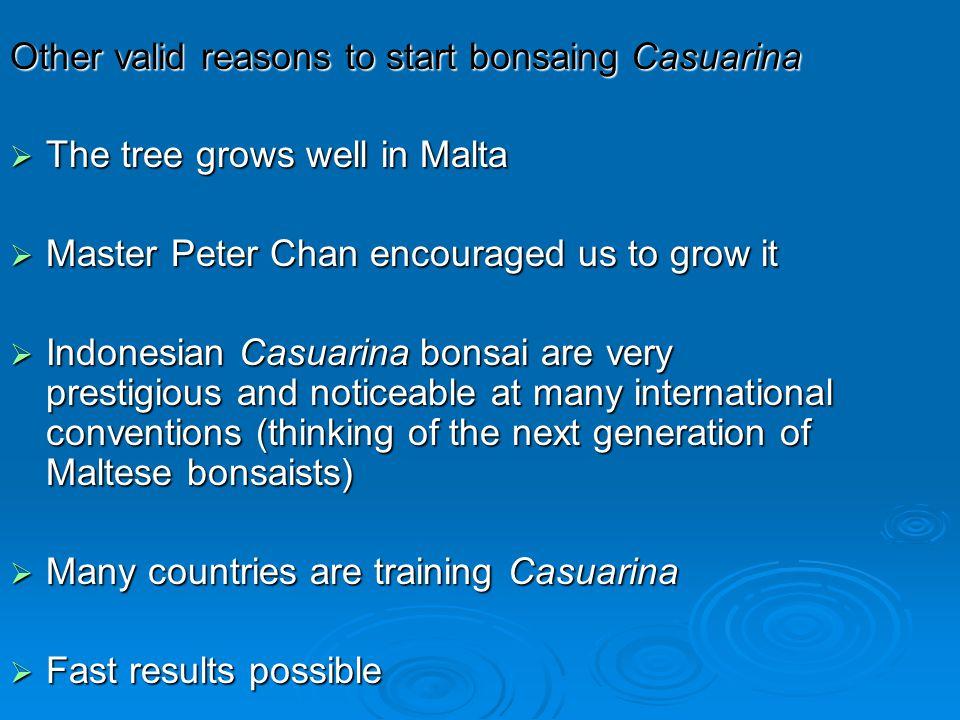 Other valid reasons to start bonsaing Casuarina