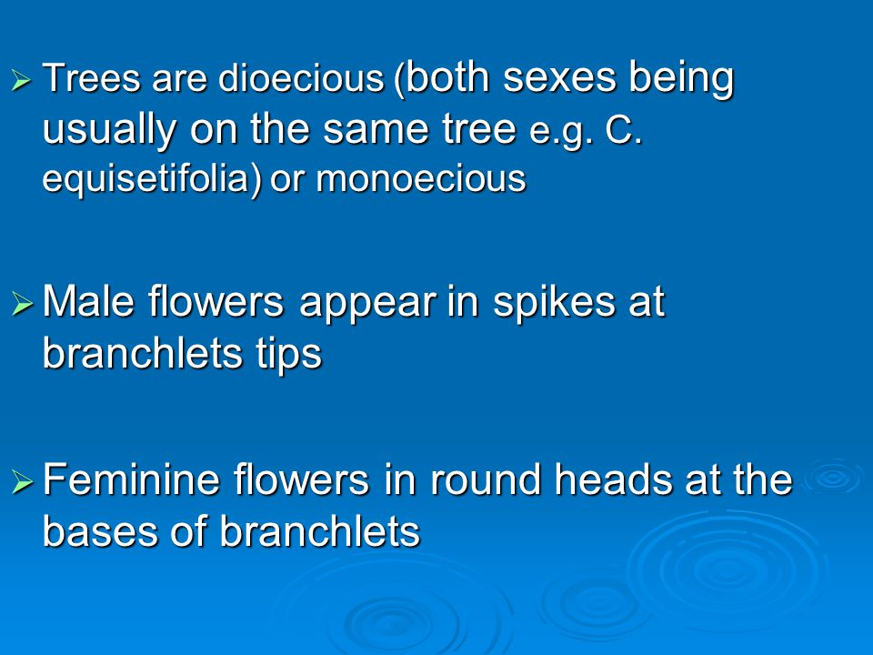 Male flowers appear in spikes at branchlets tips