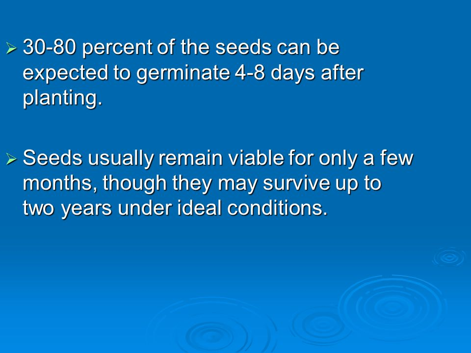 30-80 percent of the seeds can be expected to germinate 4-8 days after planting.
