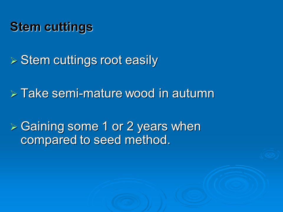 Stem cuttings Stem cuttings root easily. Take semi-mature wood in autumn.